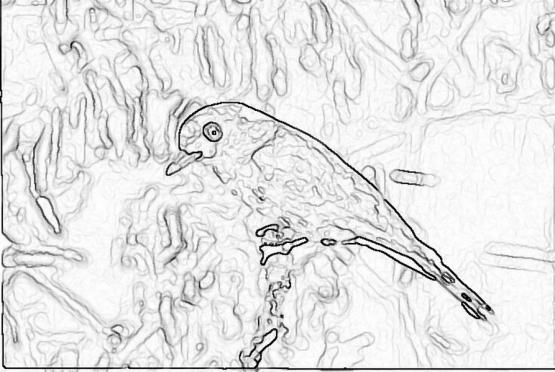 ptic_22
