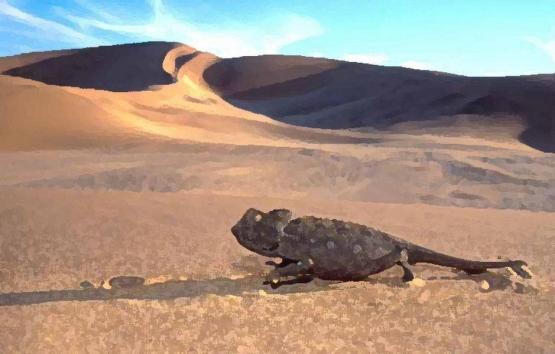 reptile_10