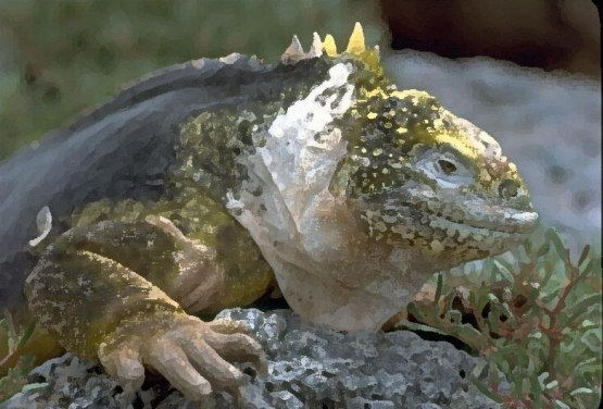 reptile_2