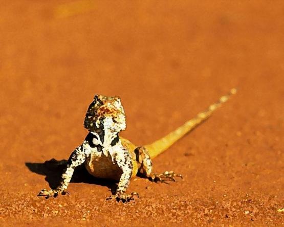 reptile_4