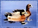 ptic_109