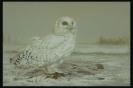 ptic_121