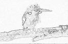 ptic_20