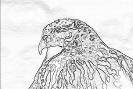 ptic_40
