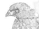 ptic_72