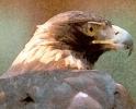 ptic_87