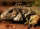 reptile_6